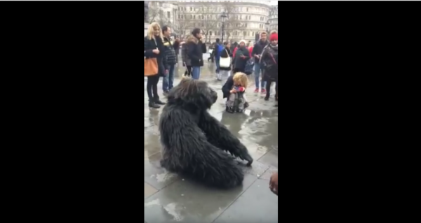 Ugandan Mountain Gorilla Spotted In Trafalgar Square