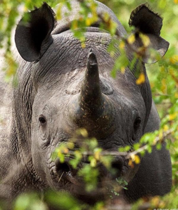 Image 1 - Rhinos Return To Rwanda