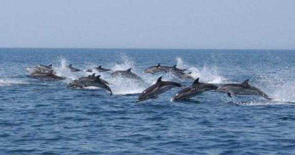 Discover Dolphins at Grand Hotel Principe di Piemonte