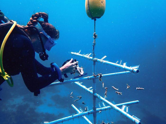 JOALI coral nursery